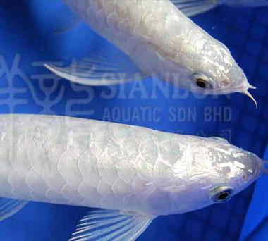 淡水鱼和海水鱼养殖的区别
